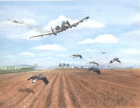Painting. A-10s flying low over East Anglia cause a mass take-off of Lapwings in the field below, scaring both the A-10 pilots and the Lapwings!